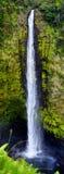 Akaka majestuoso baja cascada situada en la corriente de Kolekole en la isla grande de Hawaii Foto de archivo