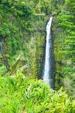 Akaka Spada na Dużej wyspie Hawaje w tropikalni podeszczowi pierwszy plany Zdjęcie Stock