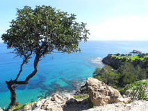 Akamas halvö, Cypern Arkivbild