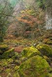 Akame 48 cachoeiras Fotos de Stock Royalty Free
