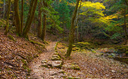 Akame-Nebenfluss in Nabari, Mie, Japan Lizenzfreies Stockfoto