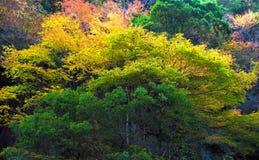 Akame-Nebenfluss in Nabari, Mie, Japan Stockfotografie
