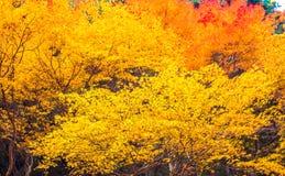 Akame-Nebenfluss in Nabari, Mie, Japan Lizenzfreie Stockfotografie