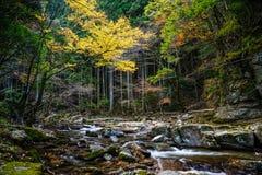 Akame 48 vattenfall Arkivbild