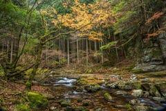 Akame 48 waterfalls Stock Images