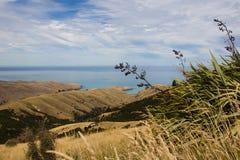 Akaroa半岛海湾 图库摄影