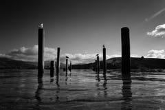 Akaroa bay. Bay of akaroa in New Zealand Stock Images
