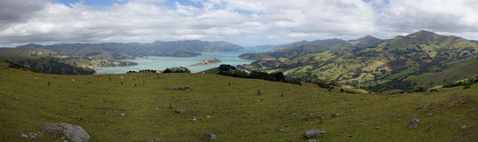 Akaroa-Hafenpanorama, Neuseeland lizenzfreies stockbild