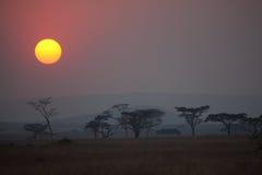 Akazien-Bäume Lizenzfreie Stockfotografie