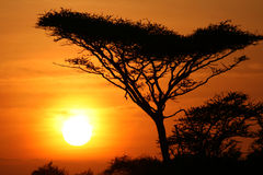 Akazien-Baum-Sonnenuntergang, Serengeti, Afrika Lizenzfreie Stockfotos