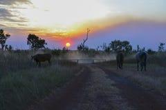 Akazien-Sonnenuntergang lizenzfreie stockfotografie