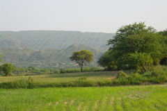Akazienbaum und -berg Stockfotos