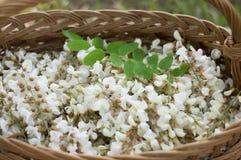Akazienblumen im Korb auf dem Feld Lizenzfreie Stockfotos