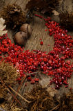 akcesoryjna czerwień Zdjęcia Royalty Free