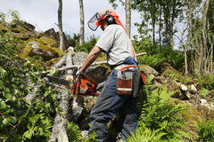 akci lumberjack Obraz Royalty Free