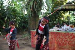 Akcja młodymi sierota Cacao, kawa i pikantności plantacja przy wioską Kalibaru w Wschodnim Jawa Indonezja, Fotografia Royalty Free