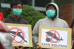 Akcja ochraniać delfiny od cyrkowego biznesu Zdjęcie Royalty Free