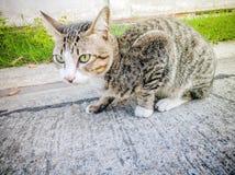 Akcja tematów kota Zwierzęcego zakończenia Śliczny kot Domowy, akcja kot Zdjęcia Stock