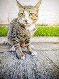 Akcja tematów kota Zwierzęcego zakończenia Śliczny kot Domowy, akcja kot Zdjęcia Royalty Free