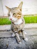 Akcja tematów kota Zwierzęcego zakończenia Śliczny kot Domowy, akcja kot Obrazy Royalty Free