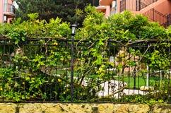 Akcyjna fotografia żelaza ogrodzenie Obraz Stock