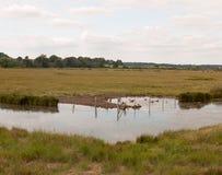 Akcyjna fotografia - grupa ptaka gęsi kanadyjczyk i bobowy odpoczywa i zdjęcia stock