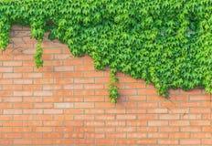 Akcyjnej fotografii tekstury ściany z cegieł stary tło wyszczególniający obraz stock