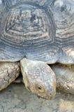 Akcyjny wizerunek Gigantyczny Tortoise Fotografia Stock