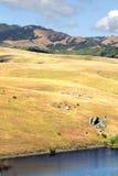 Akcyjny wizerunek Kalifornia centrali wybrzeże, Duży Sura, usa Zdjęcie Royalty Free