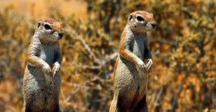 Akcyjny wizerunek przyroda w Afrykańskim parku narodowym zdjęcie stock