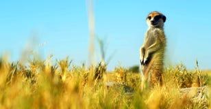 Akcyjny wizerunek przyroda w Afryka?skim parku narodowym obrazy royalty free