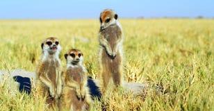 Akcyjny wizerunek przyroda w Afryka?skim parku narodowym fotografia stock