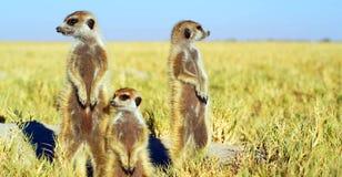 Akcyjny wizerunek przyroda w Afryka?skim parku narodowym obraz royalty free