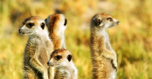 Akcyjny wizerunek przyroda w Afryka?skim parku narodowym zdjęcie royalty free