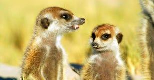 Akcyjny wizerunek przyroda w Afryka?skim parku narodowym obraz stock