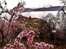 Akdamar海岛和教会 免版税库存图片