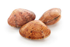 Akegai, japanese shellfish Royalty Free Stock Photo