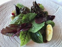 Akelare Appetizer. A delicious leafy green salad served at Akelare - A three 3 star MICHELIN restaurant in San Sebastian located in the Basque region of Spain stock photo