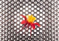 Akelei-Blume auf futuristischem Stockfoto