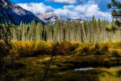 Aken från längs den Banff för pilbågedalgångallé nationalparken, Alberta, Kanada Arkivfoto