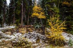 Aken från längs den Banff för pilbågedalgångallé nationalparken, Alberta, Kanada Royaltyfri Foto