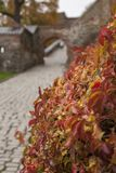 Autumn in Oslo, Norway, Europe - colourful leaves at the Akershus Fortress. Akershus Fortress or Akershus Castle is a medieval castle that was built to protect royalty free stock photo