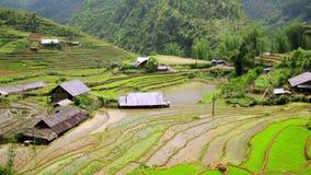 Akha byar i Sapa, Vietnam, storartade ris terrasserar stock video