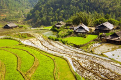 Akha villages in Sapa, Vietnam, Magnificent Rice Terrace Royalty Free Stock Images
