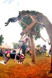 Akha woman in traditional dress playing Akha Swing Festival. Stock Photo