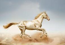 Akhal-teke hästspring i öken royaltyfri foto