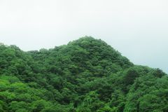 Mountain full of trees and vegetation. At the Akigawa valley in Tokyo, a mountain full of trees Royalty Free Stock Photography