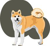Akita color Stock Images