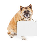 Akita Dog Carrying Blank Sign Royalty Free Stock Photos