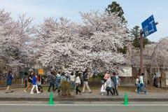 Akita, Giappone - aprile 27,2014: Sakura in riva del fiume di Kikonai Immagini Stock